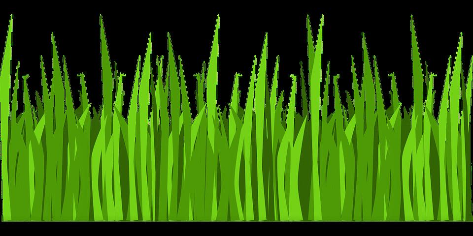 Erba Prato Natura Grafica Vettoriale Gratuita Su Pixabay