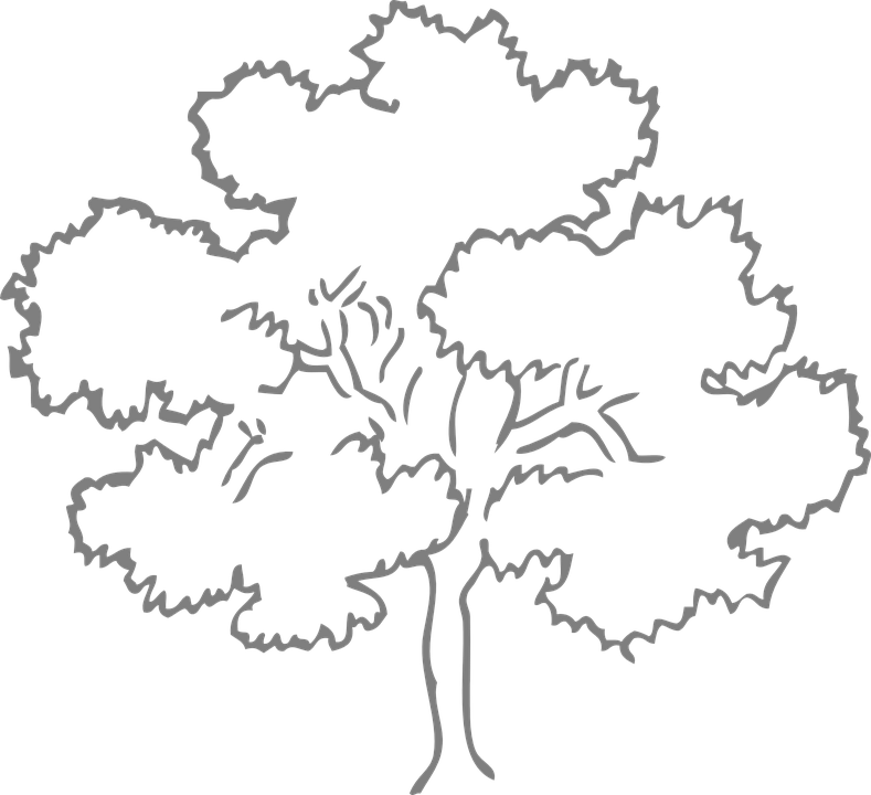 Oak Tree Outline Free vector graphic on Pixabay