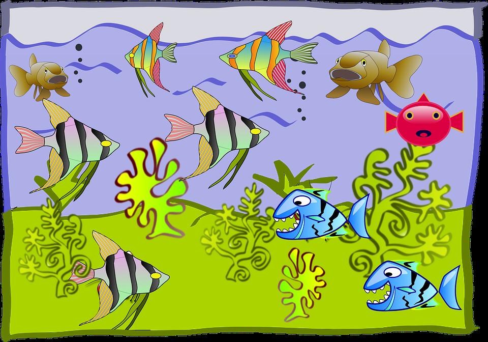 Fishtank Cartoon Aquarium Kostenlose Vektorgrafik Auf Pixabay