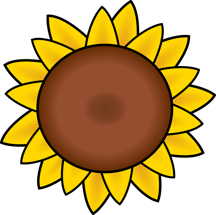 Sunflower petals drawing free vector graphic on pixabay sunflower petals drawing summer yellow flower mightylinksfo