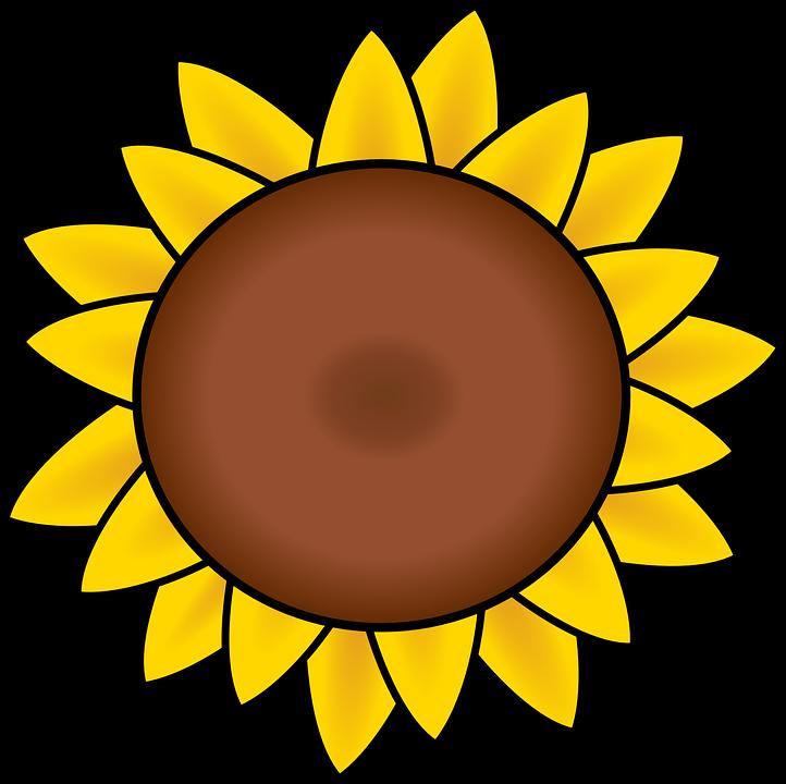 Tournesol p tales dessin images vectorielles gratuites - Dessin de tournesol ...