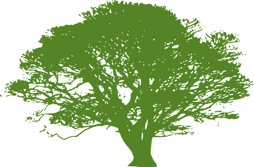 tree green silhouette free vector graphic on pixabay
