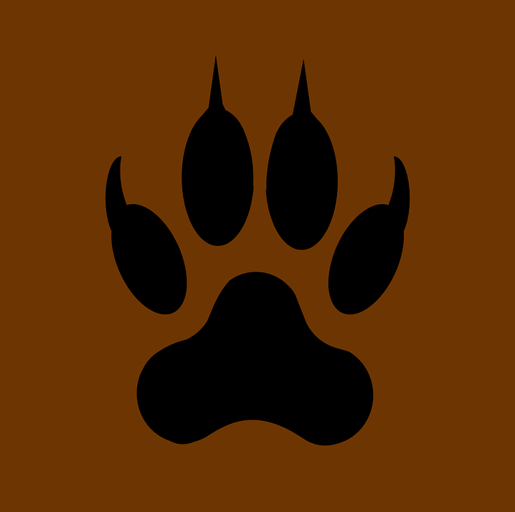 wolf paw claws free vector graphic on pixabay