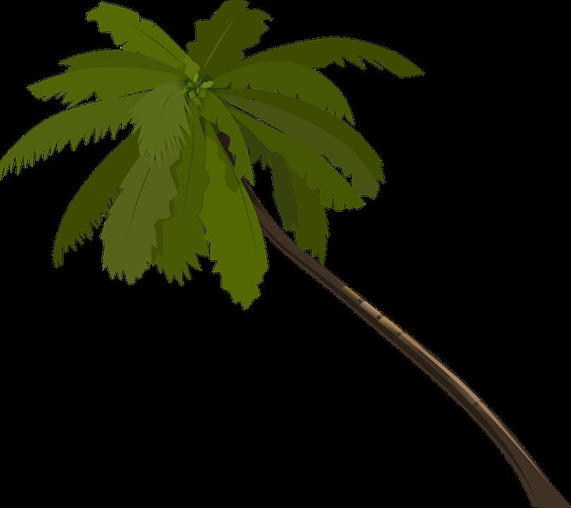 Palmeira Arvore Frondes Grafico Vetorial Gratis No Pixabay
