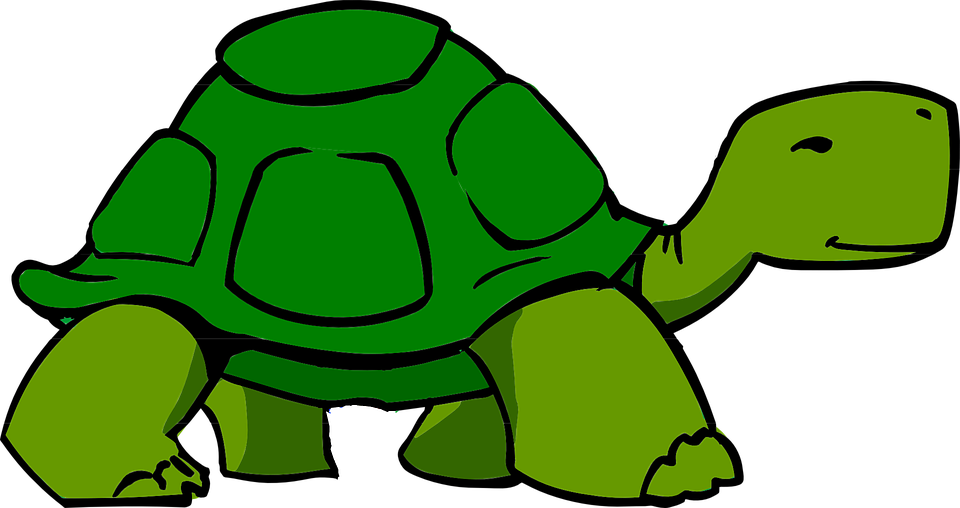 Turtle Green Shell Free Vector Graphic On Pixabay