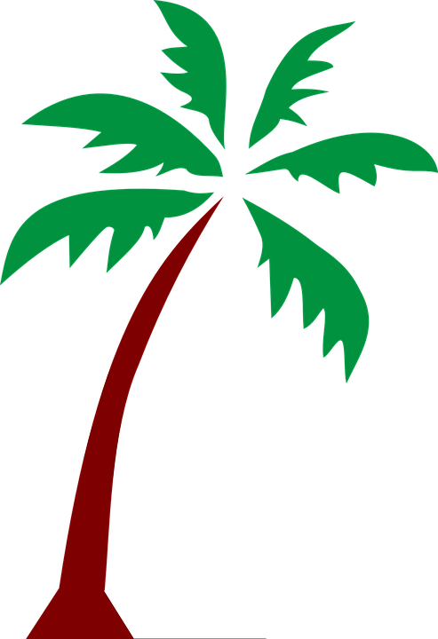 island palm fronds  vector graphic  pixabay