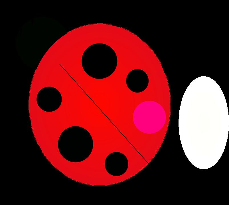 Junebug Ladybug Ladybird · Free vector graphic on Pixabay