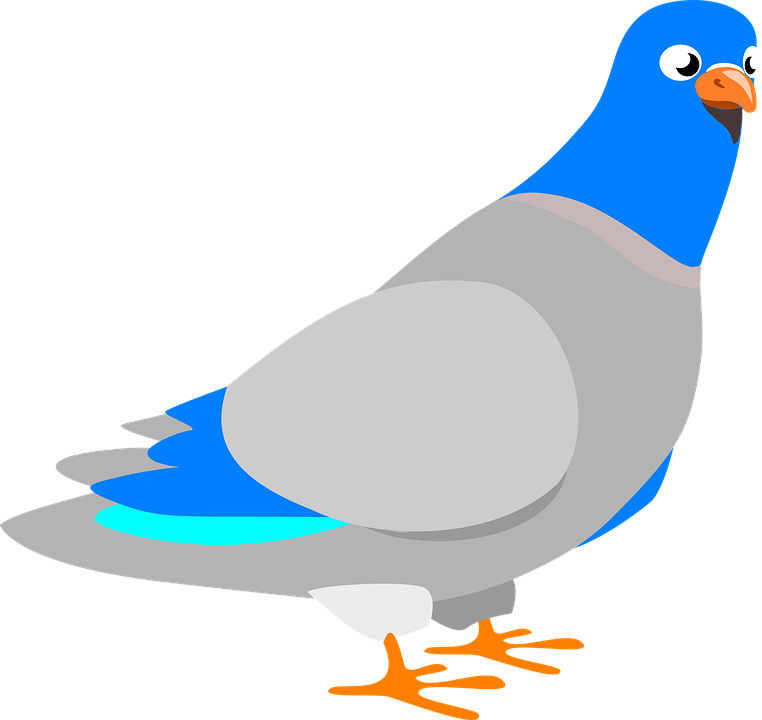 Merpati Burung Hewan Perdamaian Bulu