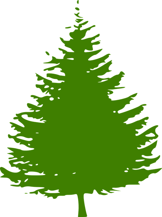 pine tree christmas free vector graphic on pixabay rh pixabay com pine tree clip art silhouette pine tree clip art black and white
