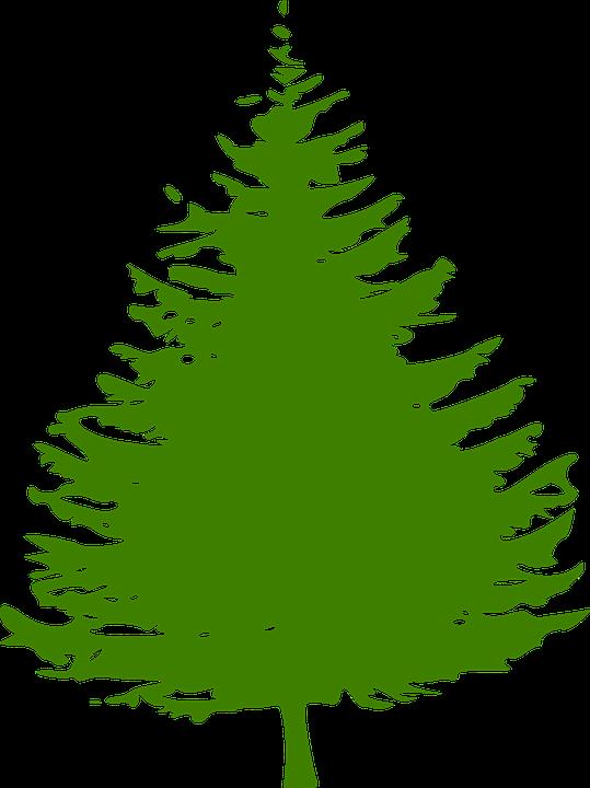 Kiefer baum weihnachtsbaum kostenlose vektorgrafik auf - Weihnachtsbaum kiefer ...
