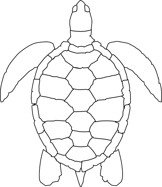 turtle animal reptile  u00b7 free vector graphic on pixabay