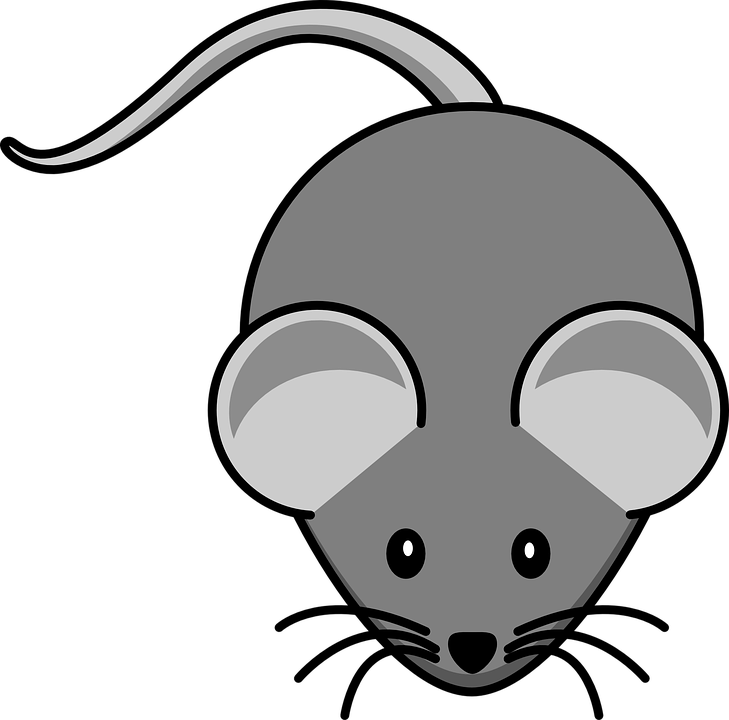 mouse grey animal free vector graphic on pixabay rh pixabay com pc mouse schematic amiga mouse schematic