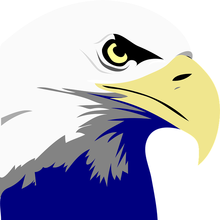 eagle bird united free vector graphic on pixabay rh pixabay com bald eagle vector free download bald eagle vector art free