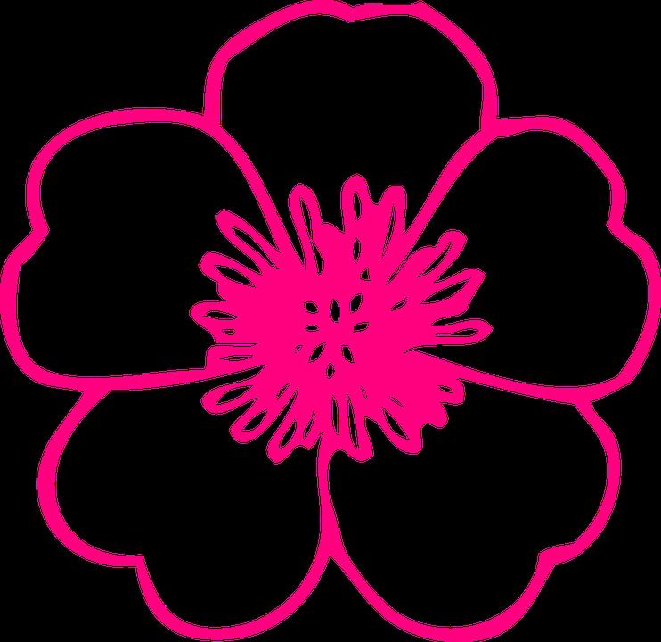 image vectorielle gratuite: fleur, rose, plantes, renoncule