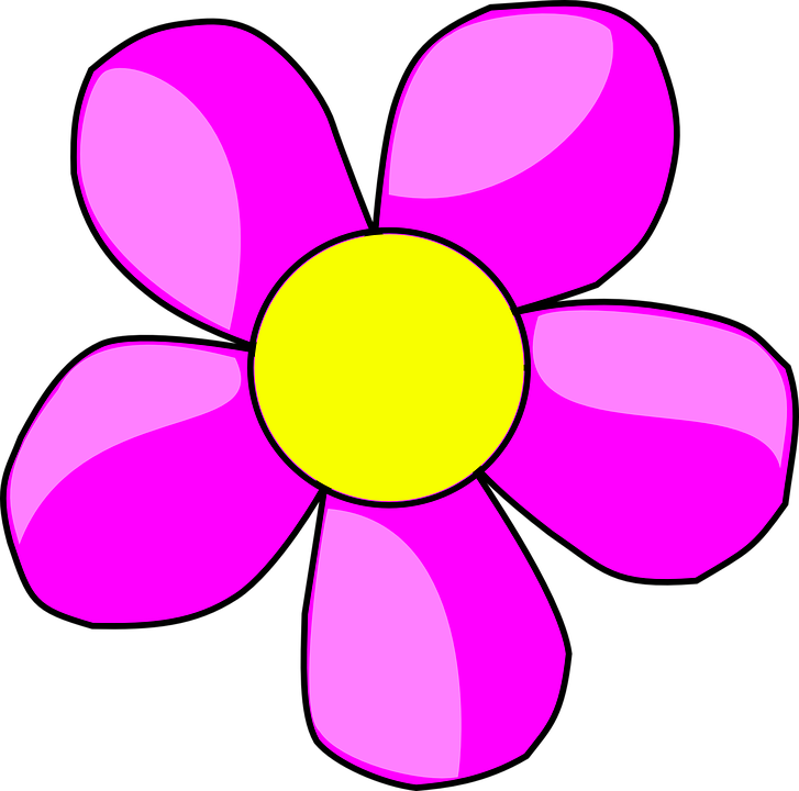 Flower Blossom Purple Plant Petals Pink Yellow