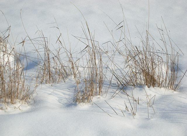 Free photo: Snow, Grass, Landscape, Winter - Free Image on Pixabay - 305997