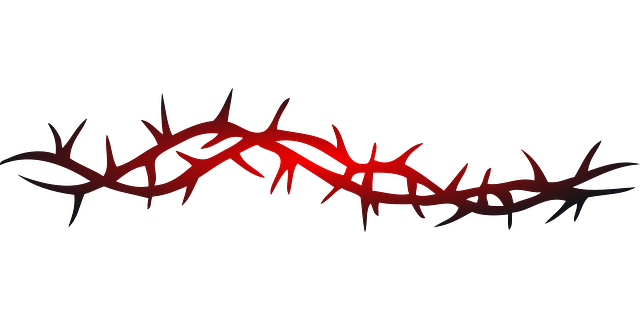 Barbed Wire Curled Twisted · Free Vector Graphic On Pixabay