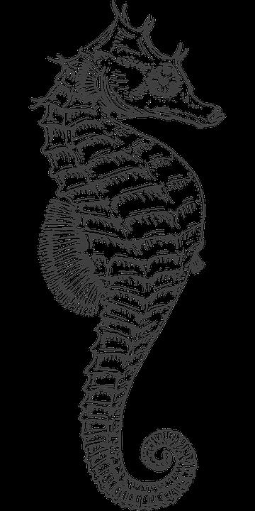 Hippocampe D Argent S%C3%A9ch%C3%A9es Morts 306188