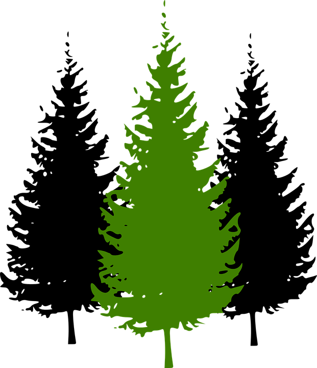 trees conifer pine free vector graphic on pixabay rh pixabay com vector pine tree images vector pine tree branch