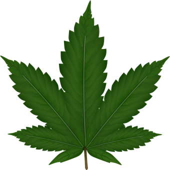 Cannabis, Hemp, Leaf, Weed, Reed, Green