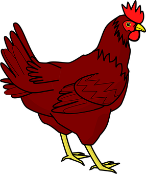 Kylling, Høne, Husdyr, Fjerkræ, Fugl