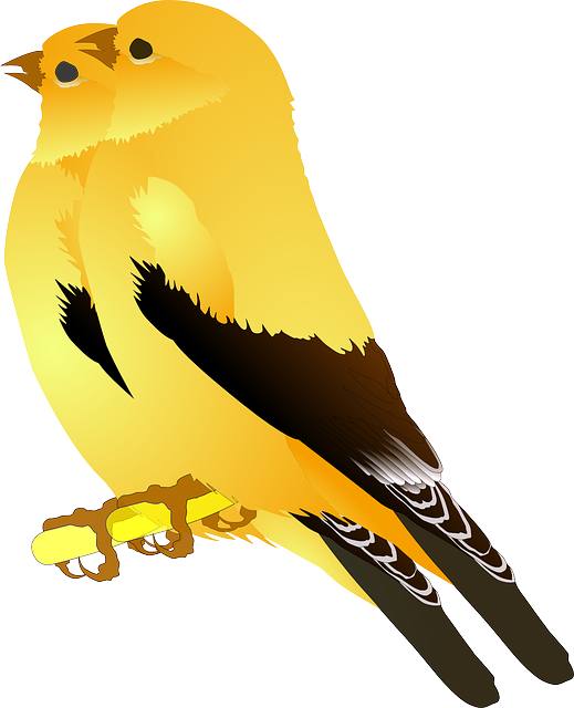 Birds Gold Finches 183 Free Vector Graphic On Pixabay