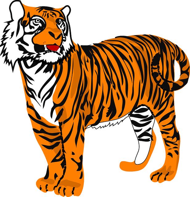 Tiger Cat Animal 183 Free Vector Graphic On Pixabay
