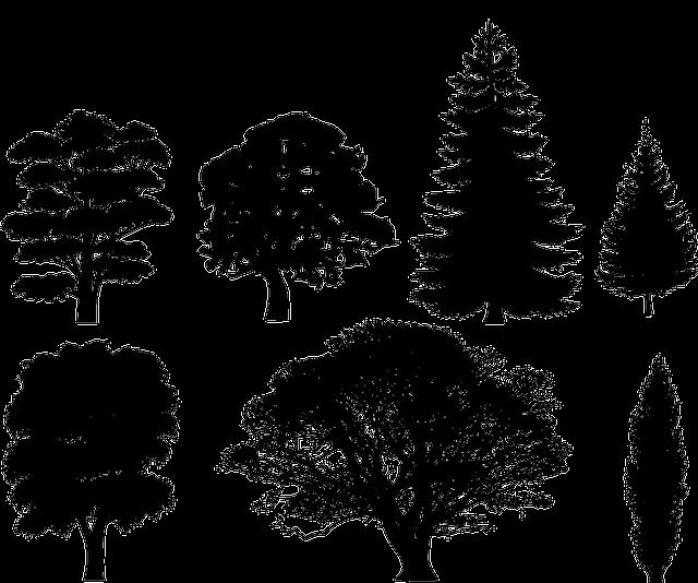 black trees deciduous 183 free vector graphic on pixabay