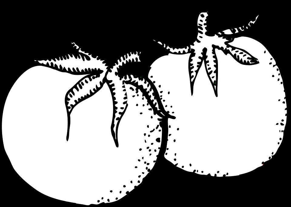 Tomat Hitam Putih Gambar Vektor Gratis Di Pixabay