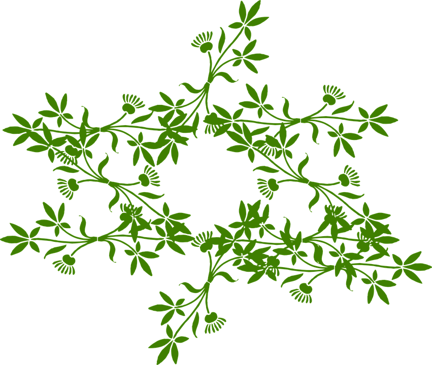 Floral Ornament Star Free Vector Graphic On Pixabay