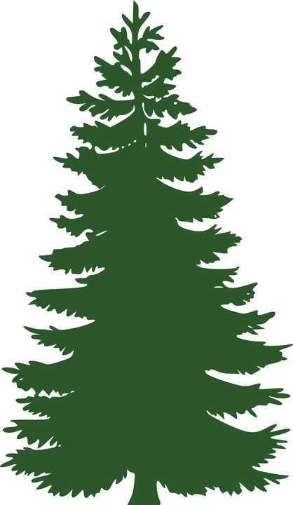 tree conifer pine free vector graphic on pixabay rh pixabay com pine tree graphics free pine tree graphic images
