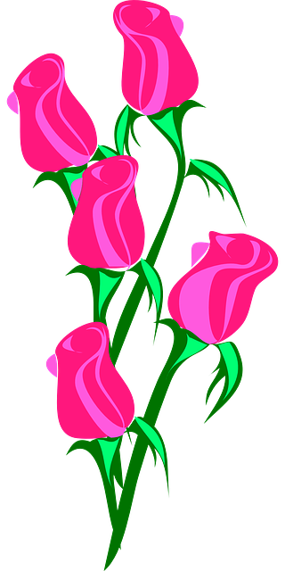 free vector graphic rose bunch pink closed love