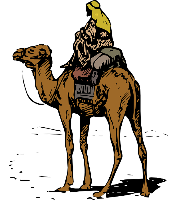 free vector graphic  bedouin  desert  camel  hot  dry - free image on pixabay