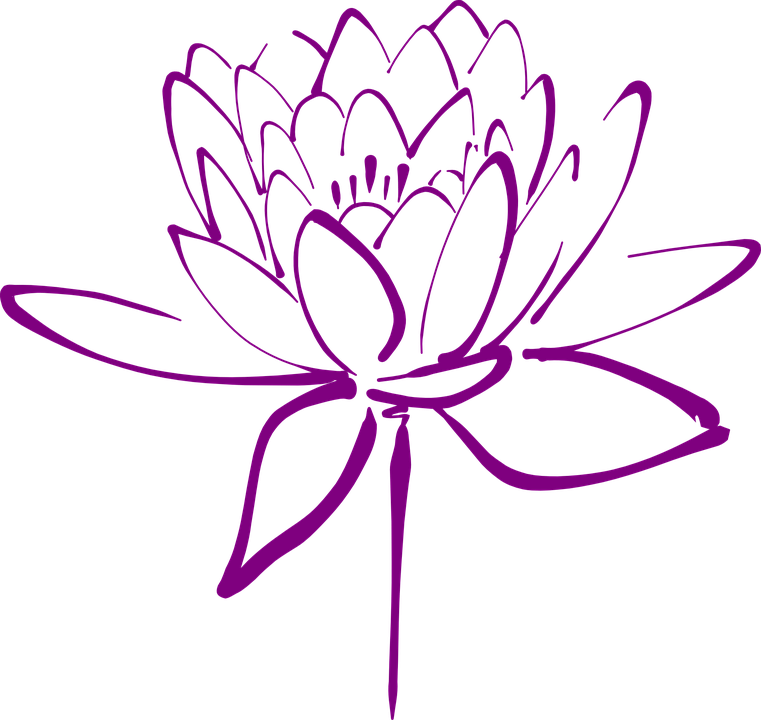 Lotus Flower Blossom Free Vector Graphic On Pixabay