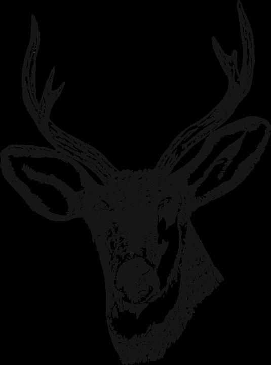 deer stag venison  u00b7 free vector graphic on pixabay Deer Head Logo free deer skull logos