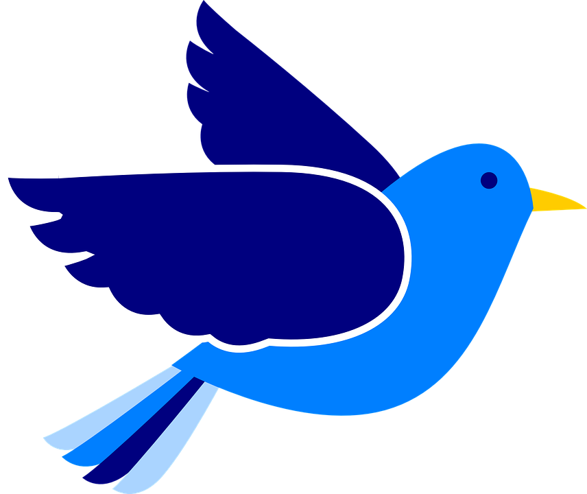 bird wings pigeon free vector graphic on pixabay rh pixabay com vector brides vector bird images