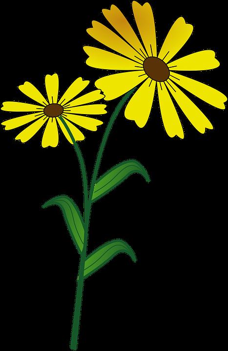 Flor Margarita Vegan · Gráficos vectoriales gratis en Pixabay