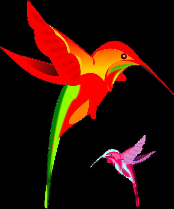 Beija Flores Colorido Grafico Vetorial Gratis No Pixabay