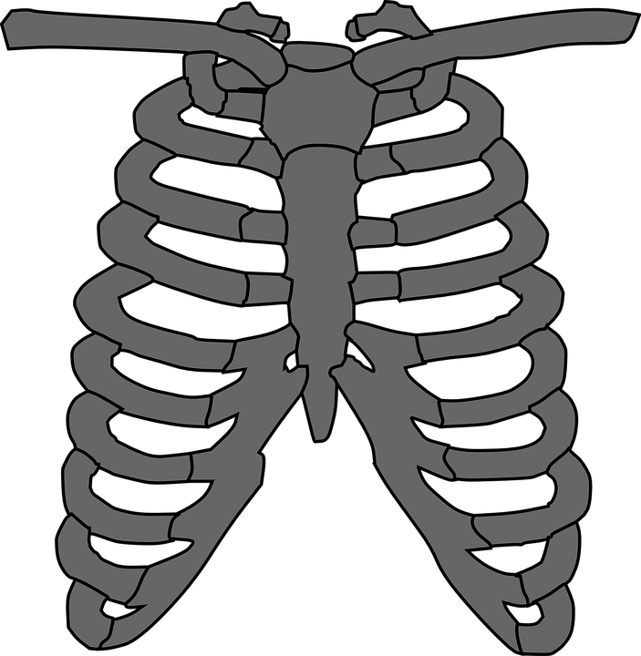free vector graphic: rib cage, skeleton, gray, human - free image, Skeleton
