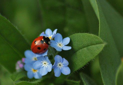 Marienkäfer, Insekt, Tiere, Insekten