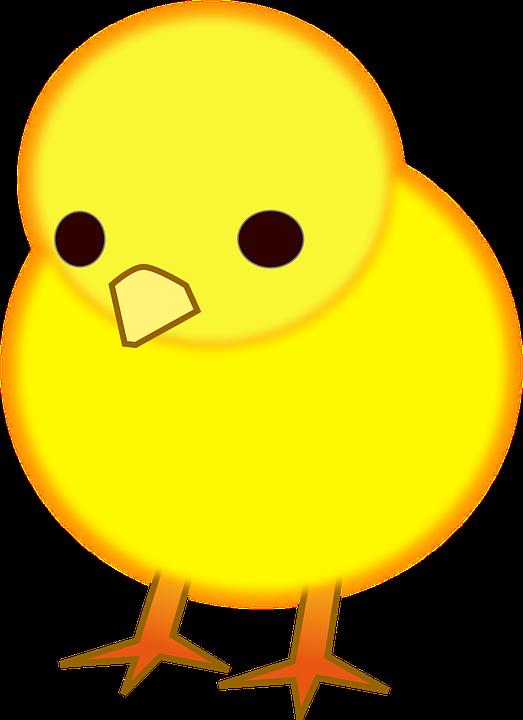 1000 Gambar Burung Anak Kecil Lucu HD Terbaru