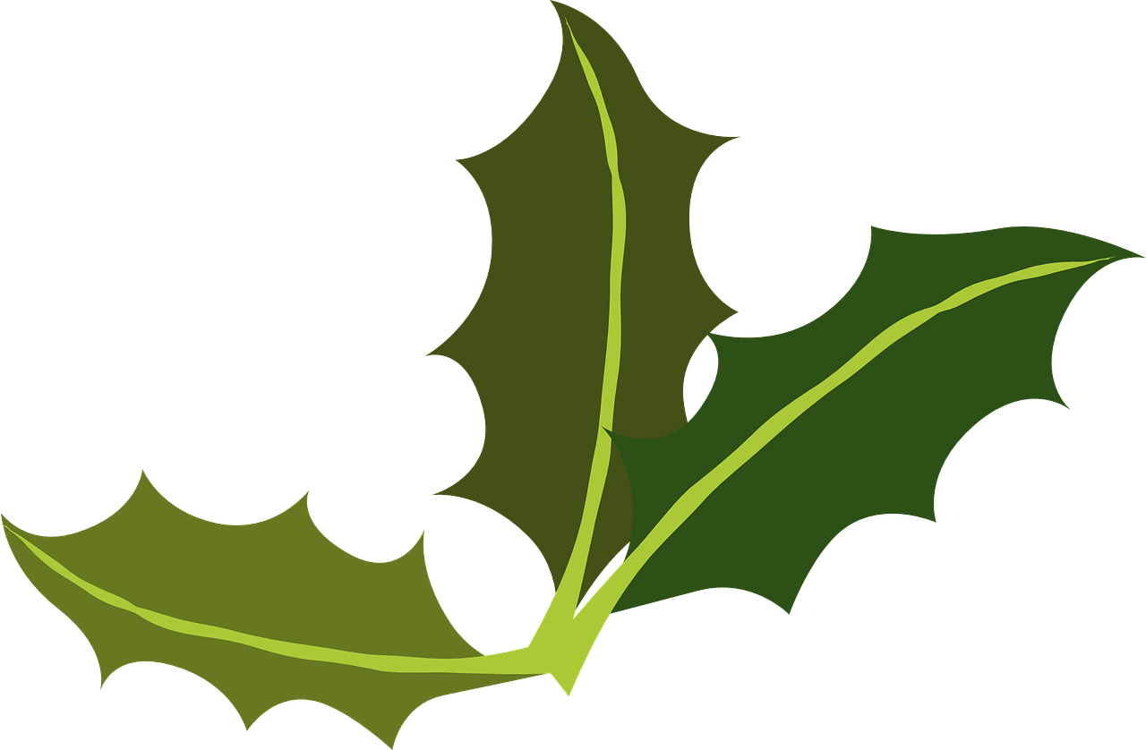 Folhas De Louro Verde Azevinho Grafico Vetorial Gratis No Pixabay