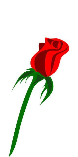 free vector graphic rose single bud love red free