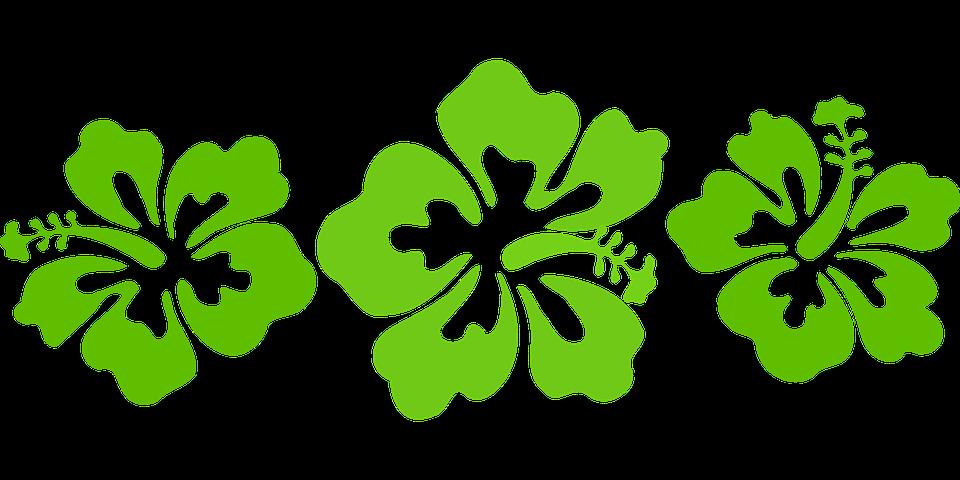 Hawaii Images Pixabay Telechargez Des Images Gratuites