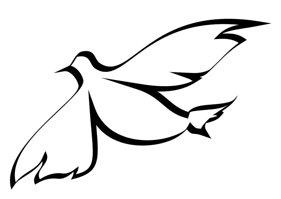 Colombe, Esprit, Sainte, Pigeon, Oiseau, Contour