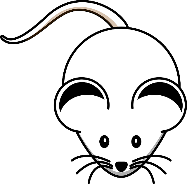 Free vector graphic: Mouse, White, Rodent, Lab, Whiskers ...