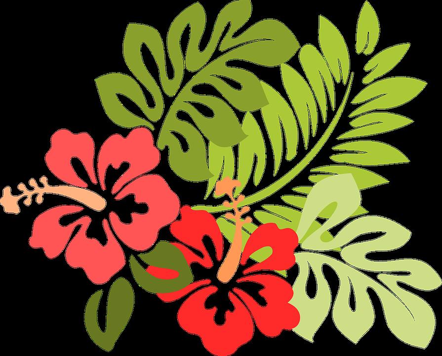 imagem vetorial gratis hawaii hibisco flora floral