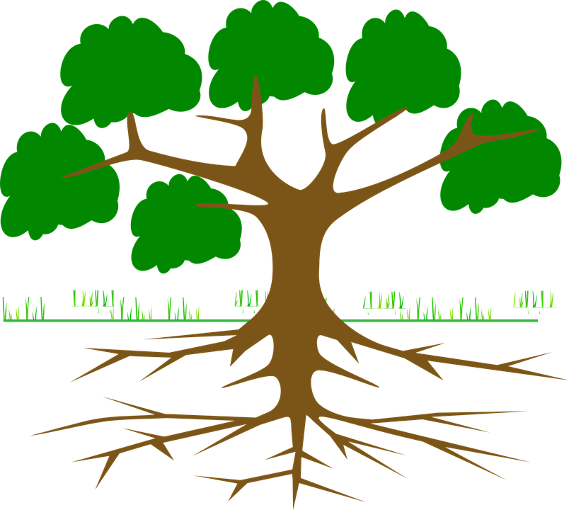 tree branches root  u00b7 free vector graphic on pixabay