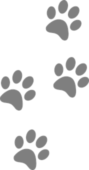 Footprints, Animal, Dog, Paw, Cat