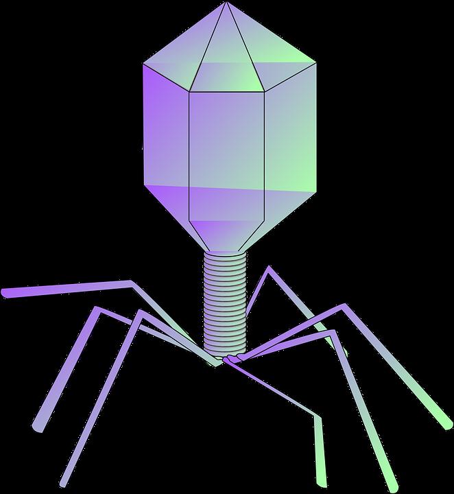 Bacteriophage Virus Phage Free Vector Graphic On Pixabay
